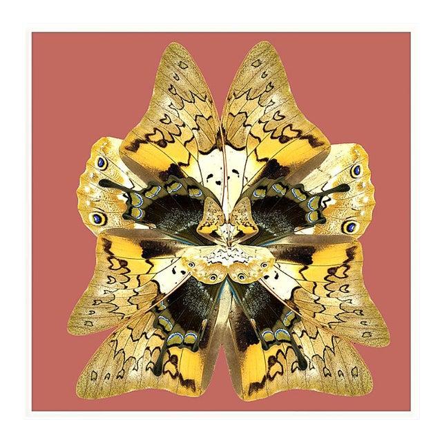 Dusk Wings: Terracotta Art Print in White Lacquer Frame For Sale