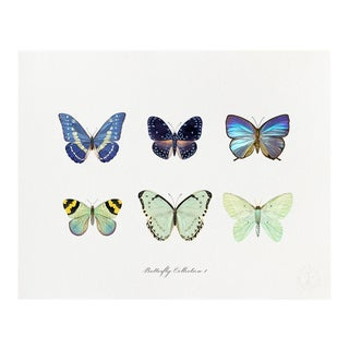 """Butterfly Collection I"" Giclée Art Print by Felix Doolittle - 8x10 For Sale"