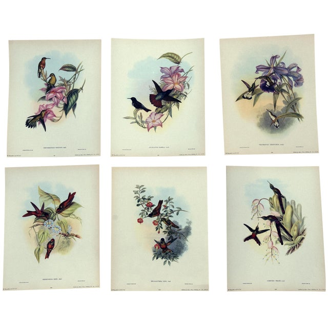 1940s John Gould Hummingbird Lithographs - Set of 6 (Marked Down to $35 Until September 15th) - Image 1 of 11