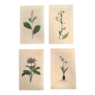 "William Curtis Hand-Colored Engravings of Botanical Studies from ""The Botanical Magazine"" - Set of 4"