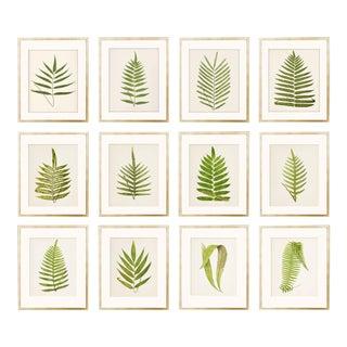 Antique Fern Botanical Unframed Prints- Set of 12