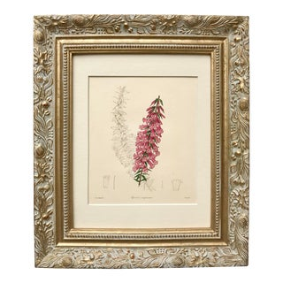 Antique Floral Botanical 19th C. By Maund For Sale