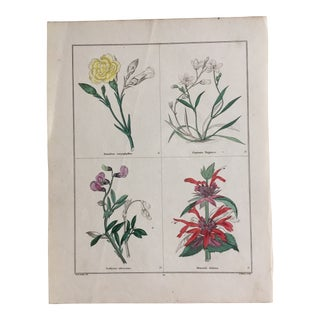 Botanicals by Benjamin Maund C. 1854 For Sale