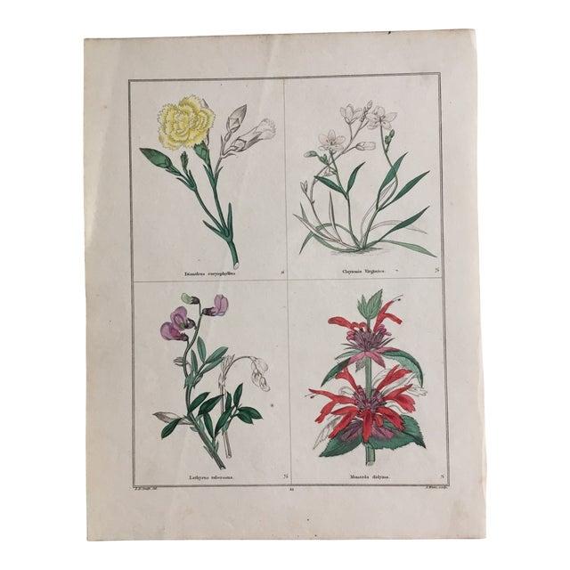 Botanicals by Benjamin Maund C. 1854 For Sale