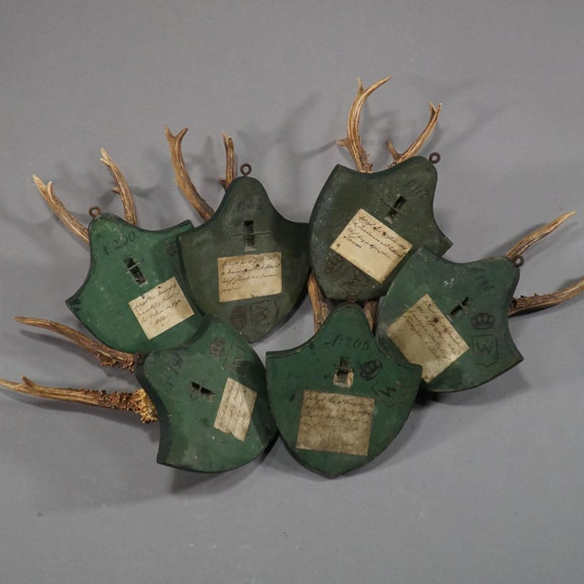 Late 19th Century Six Large Antique Deer Trophies on Wooden Carved Plaques Ca. 1860 For Sale - Image 5 of 8