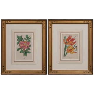 Hand-Colored Floral Engravings - a Pair For Sale