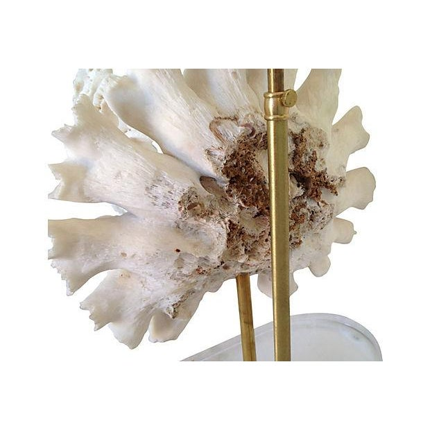 Natural Coral Lamps - Pair For Sale - Image 9 of 9