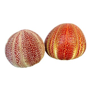20th Century Sea Urchins - Set of 2 For Sale