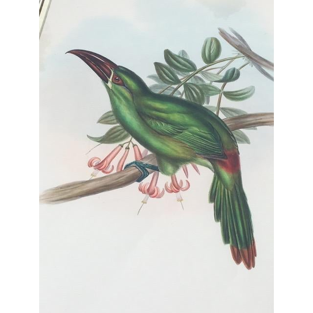 This 19th Century antique hand-colored toucan lithograph by John Gould is beautiful! The print is from the 1st edition of...