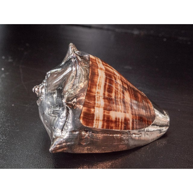 Contemporary Partially Silvered Sea Shell King's Crown For Sale - Image 3 of 6