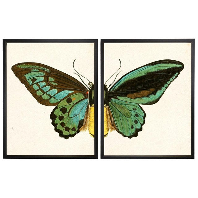 A split turquoise butterfly print framed in copper and black shadowboxes