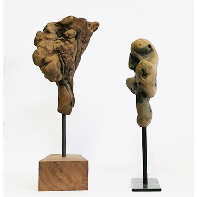 Abstract Burlwood Roots on Stands - Pair For Sale - Image 3 of 6