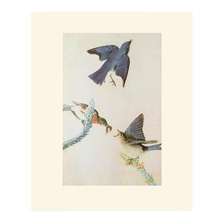 Eastern Bluebird by John James Audubon, Vintage Cottage Print For Sale
