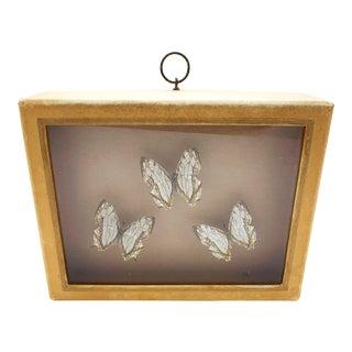 Vintage Cyrestis Formosansus Butterflies Shadow Box For Sale