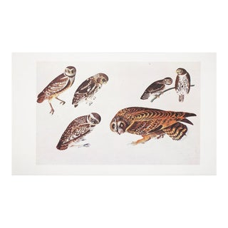 1966 Vintage Cottage Lithograph of Owls by John James Audubon For Sale