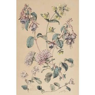 C1880 French Botanical Chromolithograph-Fushia,Chrysanthemum, Matted For Sale