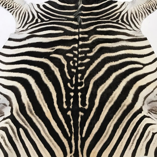 Zebra Hide Rug - 5′9″ × 7′4″ - Image 3 of 4