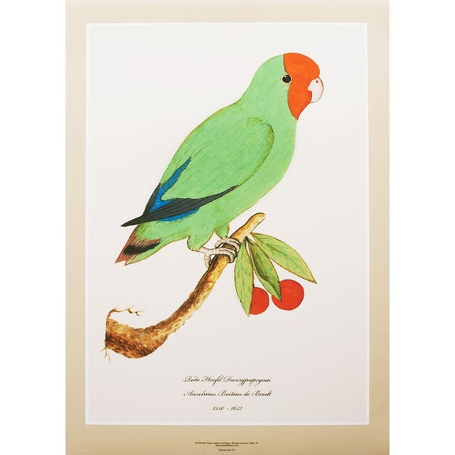 1590s Large Print of Red-Headed Lovebird by Anselmus De Boodt For Sale In Dallas - Image 6 of 6