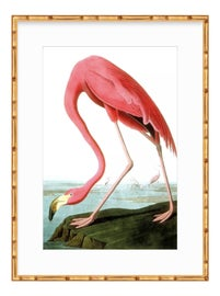 Image of John James Audubon Prints