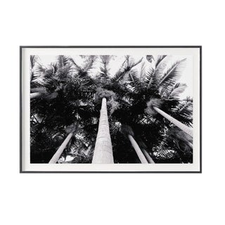 """""""Into the Palms"""" Unframed Photographic Print For Sale"""