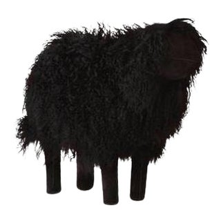 Medium Black Tibetan Lamb Sheep For Sale