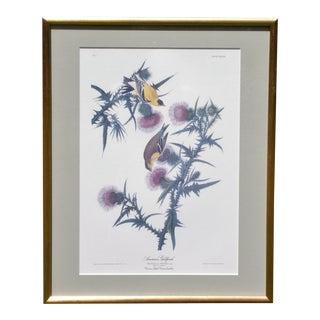 John Audubon Hand Colored Engraving American Goldfinch Lemon Gilt Framed Print For Sale