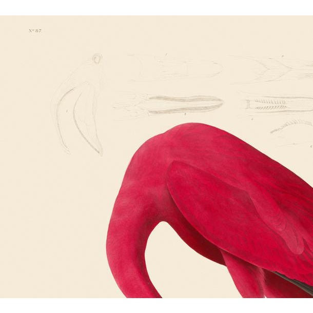 John James Audubon Print, American Flamingo For Sale - Image 4 of 6