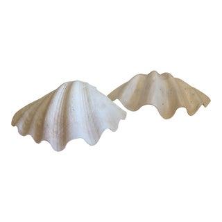 Saltwater Clamshells - A Pair