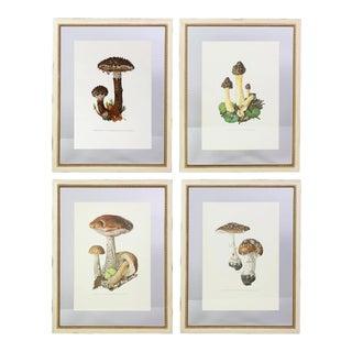Antique French Botanic Mushroom/Mycology Lithographs, Set of 4 For Sale