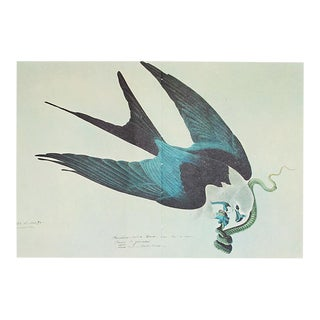 1966 Cottage Style Lithograph of a Swallow Tailed Hawk by John James Audubon