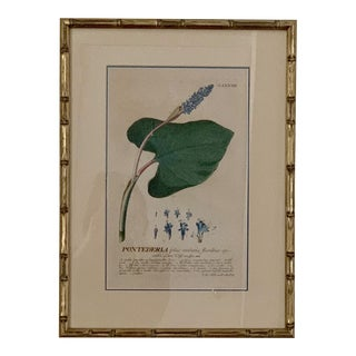 Antique Botanical Hand Colored Engraving in Custom Pewter Bamboo Frame For Sale