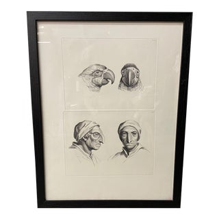 Man as Parrot - Physiognomic Heads Series Framed Illustration by Charles Le Brun For Sale