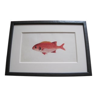 Original 19th Century Fish Watercolor Painting For Sale
