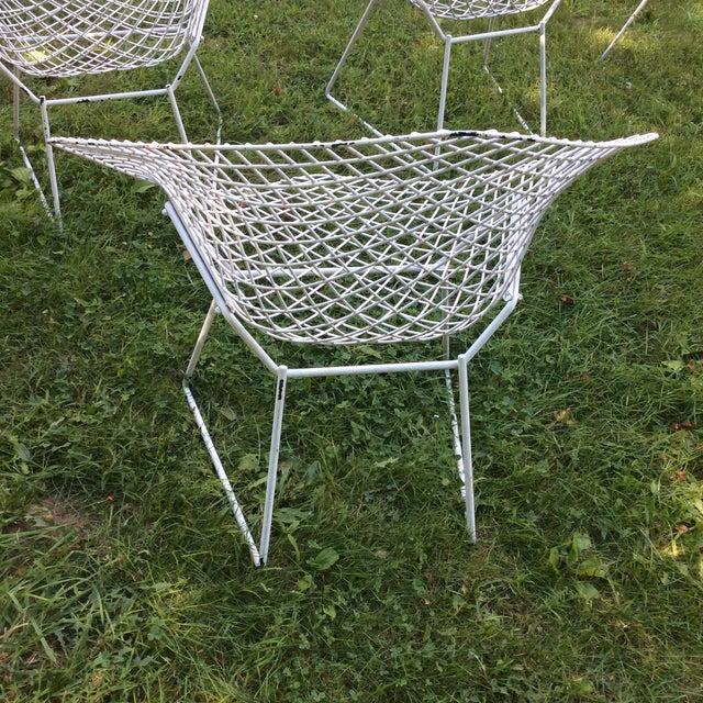 Harry Bertoia Diamond White Chairs - Set of 4 - Image 7 of 8
