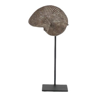 Nautilus Plicatus Fossil on Stand For Sale