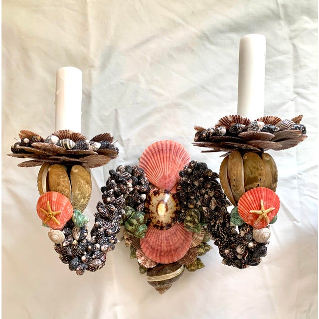 Christa's South Seashells Two Light Shell Sconces - a Pair For Sale - Image 4 of 8