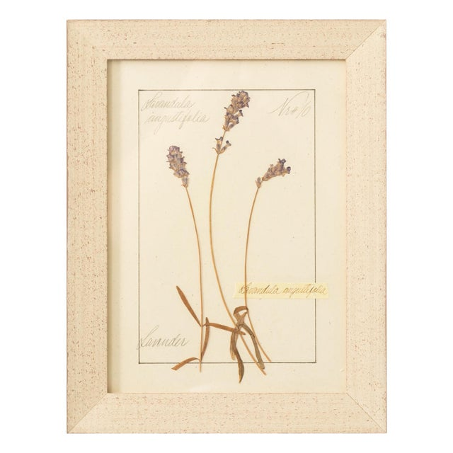 Set of Pressed Herb Frames For Sale - Image 11 of 12