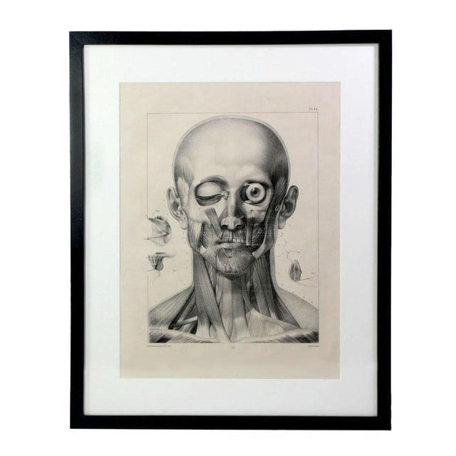 Mid 19th Century Antique 19th Century French Anatomy of Human Head Lithographic Print - Framed Under Plexiglass For Sale - Image 5 of 5