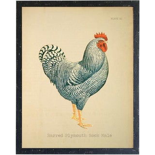Barred Plymouth Rock Rooster 14x18 Preview