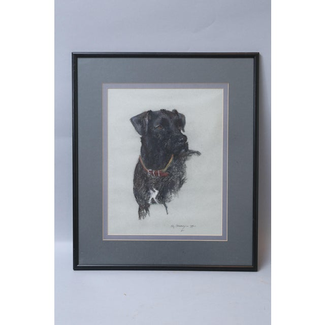 An original pastel drawing of a Labrador retriever dog by signed by the talented artist, C A Sharpley, 1992. This lovely...