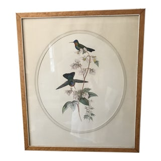 "Mid 19th Century Hummingbird Lithograph ""Panterpe Insignis"" by J Gould & H C Richter For Sale"