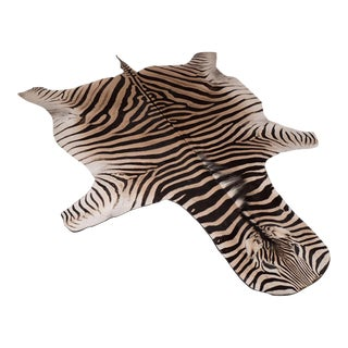Zebra Rug with Black Felt Backing and Leather Piping For Sale