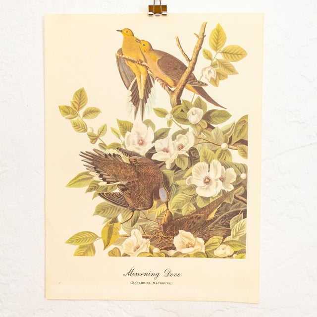 1960s John James Audubon bird prints. An instant gallery wall collection ready to frame in a large group on a single wall...