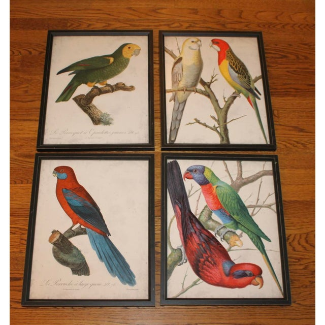 Framed Bird Wall Art Prints Pictures - Set of 4 For Sale - Image 9 of 9