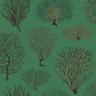 Cole & Son Seafern Curio Classic Wallpaper Sample For Sale