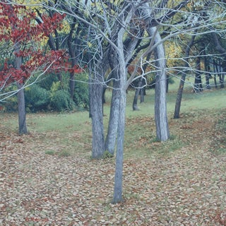 "Garrett Middaugh ""Autumn"" Oil Painting For Sale"