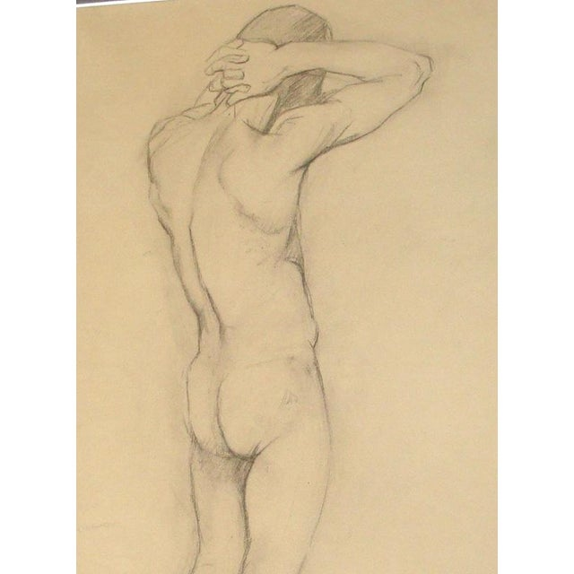Large charcoal drawing of a nude male from the rear, by Hilda Plitt (1896-1968). Work is from her art school student...