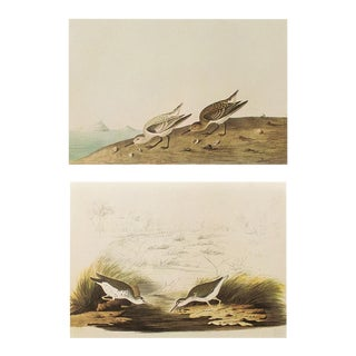 1966 Sanderling & Spotted Sandpiper by John James Audubon For Sale