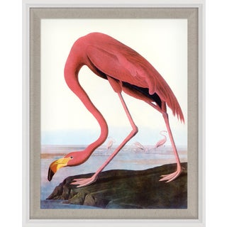 Audubon 22, Framed Artwork For Sale