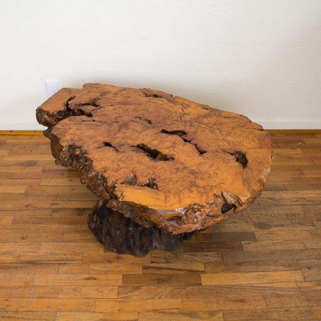 Live Edge Maple Burlwood Coffee Table For Sale - Image 9 of 11